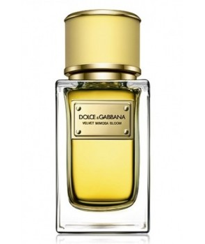 Velvet Mimosa Bloom Dolce&Gabbana for women