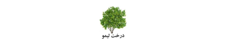 رایحه درخت لیمو