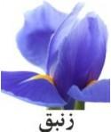 رایحه زنبق