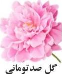 رایحه گل صدتومنی