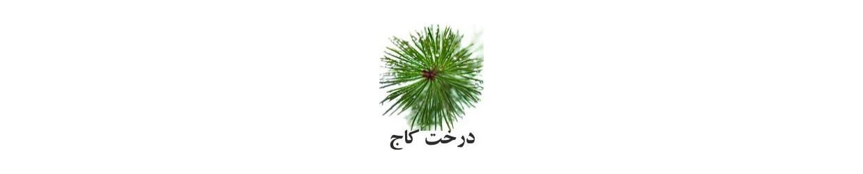 رایحه درخت کاج
