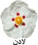 رایحه لادن