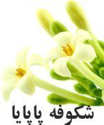 پاپايا گل