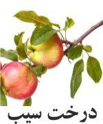 سیب درخت