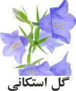 گل استکاني