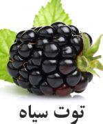 توت سیاه