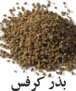 کرفس Seeds