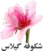 گيلاس شکوفه