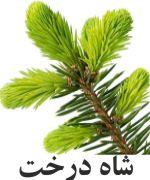 Silver شاه درخت