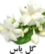 Egyptian گل ياس