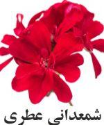 گل عطري
