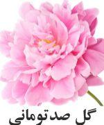 صورتي گل صد توماني