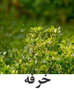 Portulaca or Pigweed