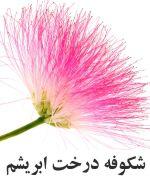 Silkwood شکوفه