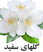 گل سفيد
